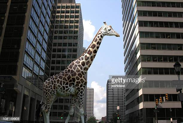 Giraffe in City Street