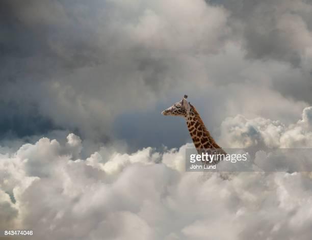 Giraffe In The Cloud