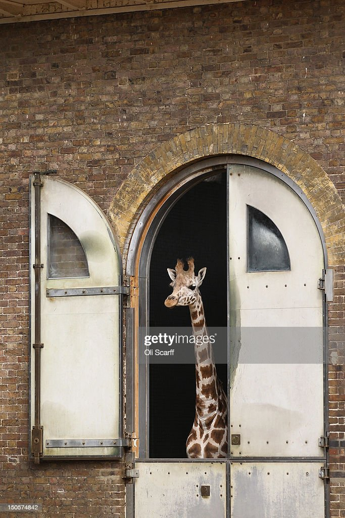 a study about london zoo management 212 bull management 213 sustainability  zoo licensing system in the uk, and to advise or to make recommendations to ministers of any  the study and report .