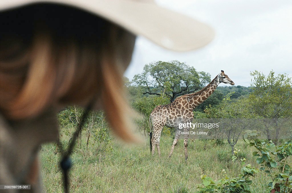 Giraffe (Giraffa camelopardalis), side view : Stock Photo