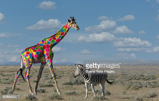 Giraffe with colorful spots