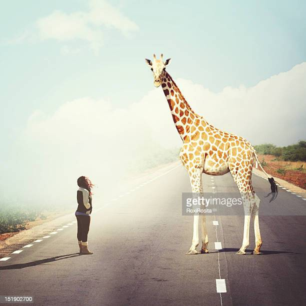 Giraffe with woman