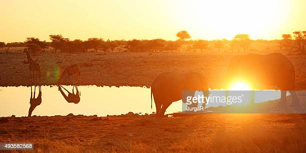 Giraffes and Elephants at a Waterhole in Etosha at Sunset