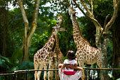 Giraffes at Singapore Zoo.