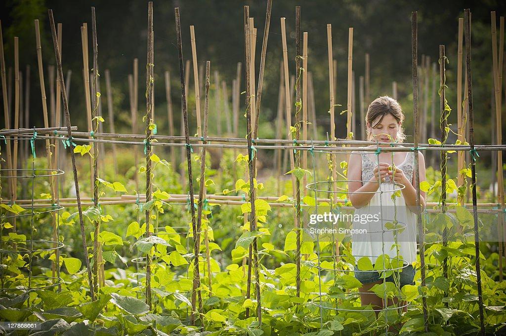 girl [10] examining string bean vines : Stock Photo