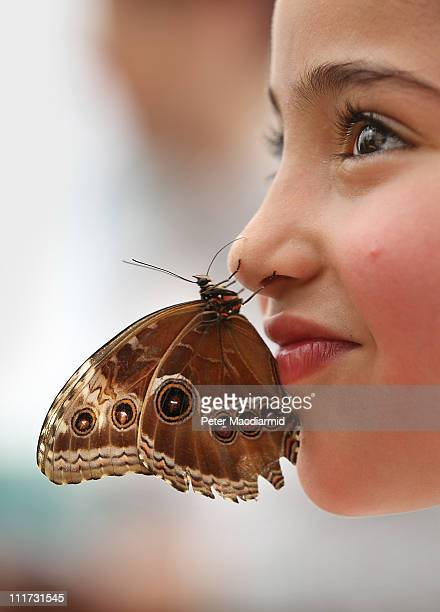 A girl allows a butterfly to be placed on her nose at the Sensational Butterflies exhibition at the Natural History Museum on April 6 2011 in London...