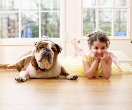 Girl and British Bulldog Playing Dressup