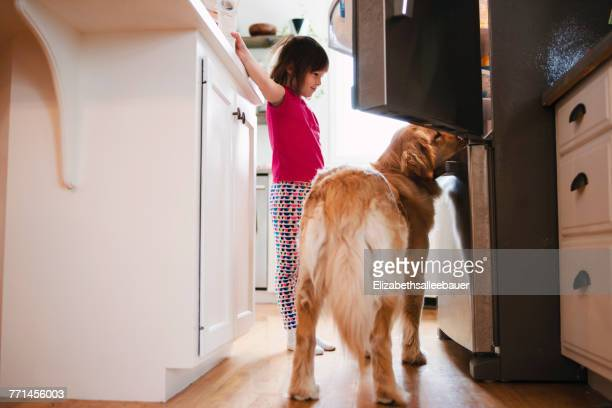 Girl and golden retriever dog looking into a refrigerator