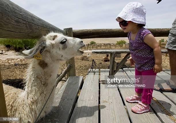 A girl approaches an alpaca at the farm of Ilan Dvir a former Israeli army commando near the town of Mitzpe Ramon in southern Israel's Negev desert...