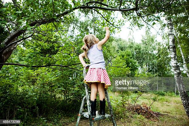 Girl at a ladder reaching for plums in the tree