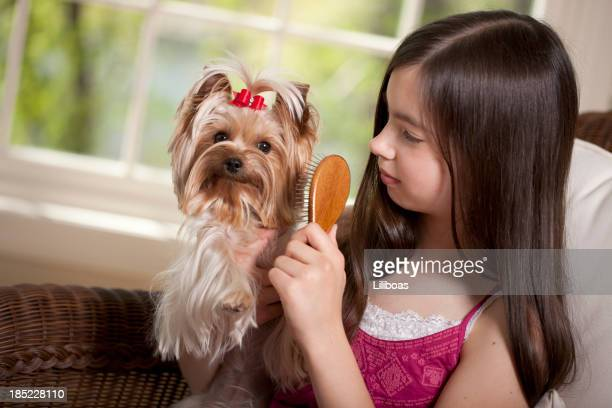 Girl Brushing Her Yorkshire Terrier Dog