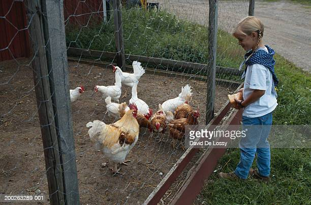 Girl by fence feeding chickens