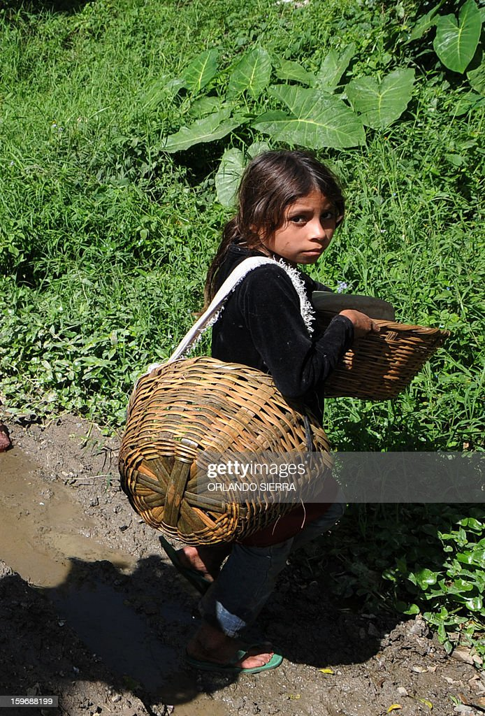 A girl carries baskets during coffee harvest in the department El Paraiso, 110 kms east of Tegucigalpa, on Januray 17, 2013. Central America, one of main producers of the best Arabica Coffee, is analyzing to take measures to combat the Roya (Puccinia graminis) blight already threatening more than one third of the bean crop, one of the region's major export items. AFP PHOTO/Orlando SIERRA