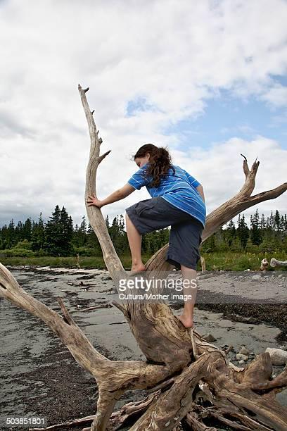 Girl climbing roots of fallen tree