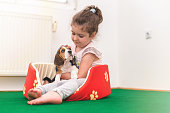girl is sitting in dog bed and petting her cub dog beagle