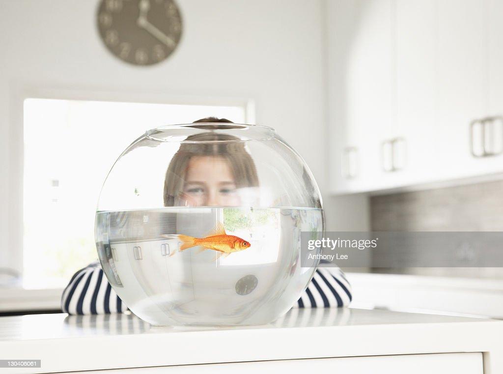 Girl examining goldfish in bowl : Stock Photo