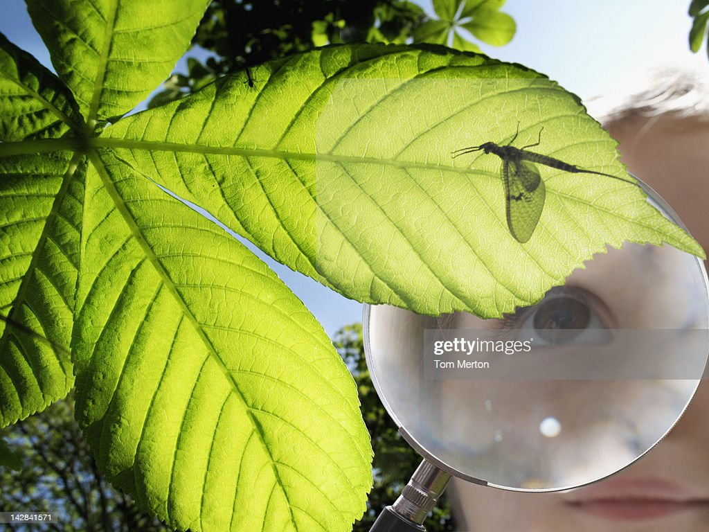 Girl examining insect through magnifying glass : Stock Photo