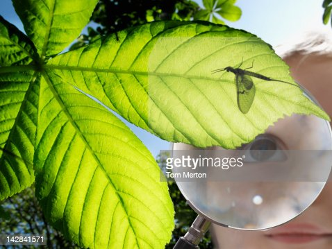 Girl examining insect through magnifying glass : Stockfoto