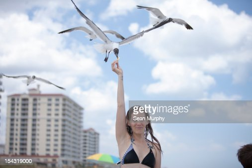 Girl feeding a sea gull on the beach : Bildbanksbilder
