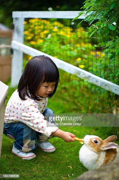 girl feeding rabbit