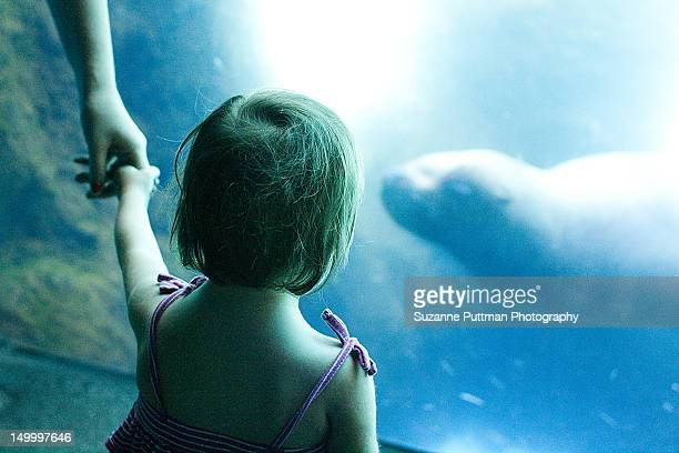 Girl gazing at sea lions in zoo