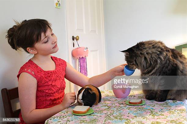 Girl, guinea pig and cat