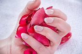 Woman hands with french nails polish style holding red rose petals in studio. Manicure and Beauty concept. Close up, selective focus