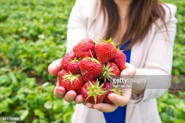 Girl Holding a Bundle of Strawberries in Farm