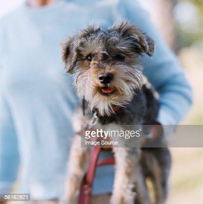 Girl holding a terrier