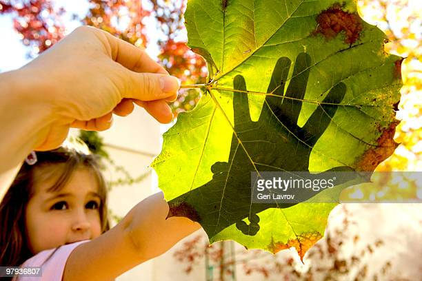 Girl holding her hand over a sycamore leaf