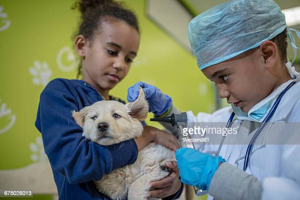 Girl holding labrador puppy while little boy playing veterinarian