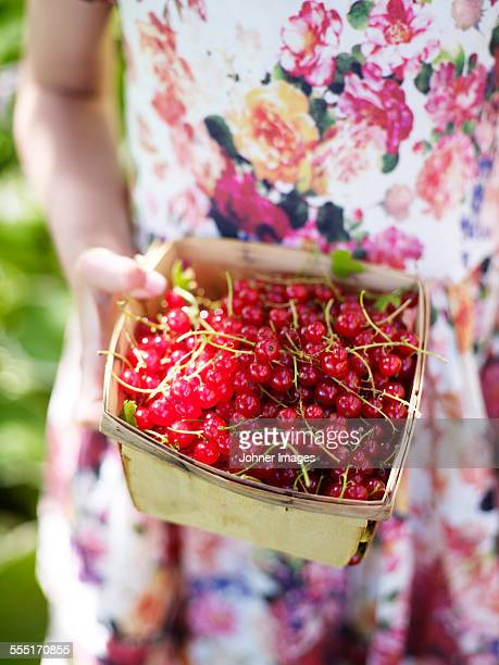 Girl holding redcurrants in basket