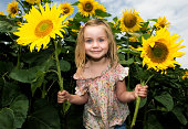 Girl holding sunflowers in field, Halesworth, Suffolk, England, UK