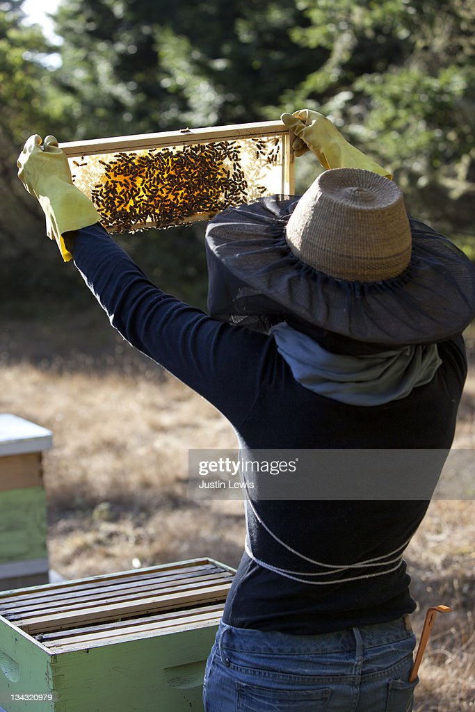 Girl holding up honey comb with bees swarming : Stock Photo