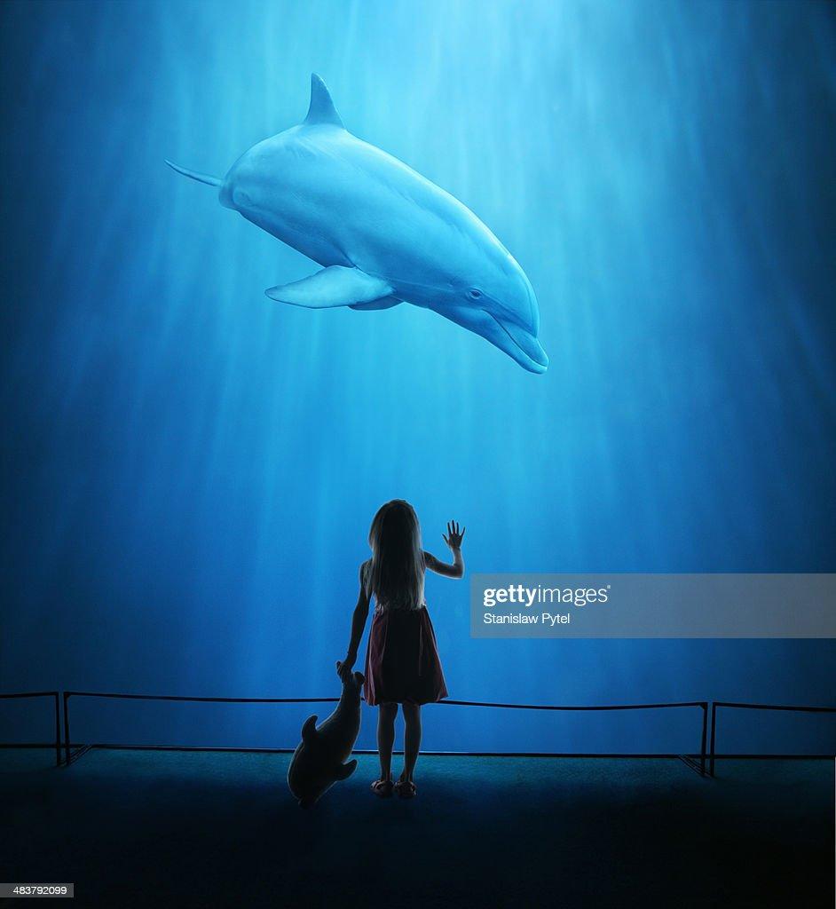 Girl in aquarium looking at dolphin
