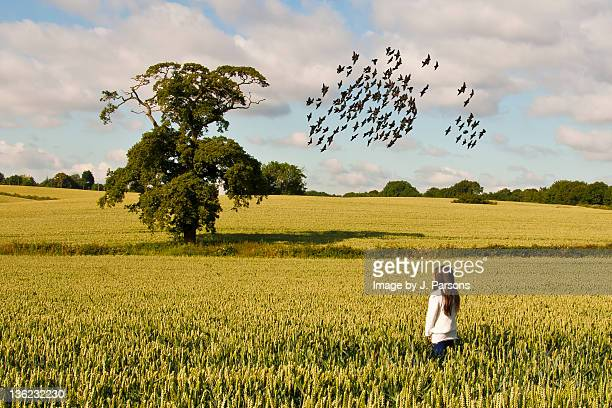 Girl in field watching birds
