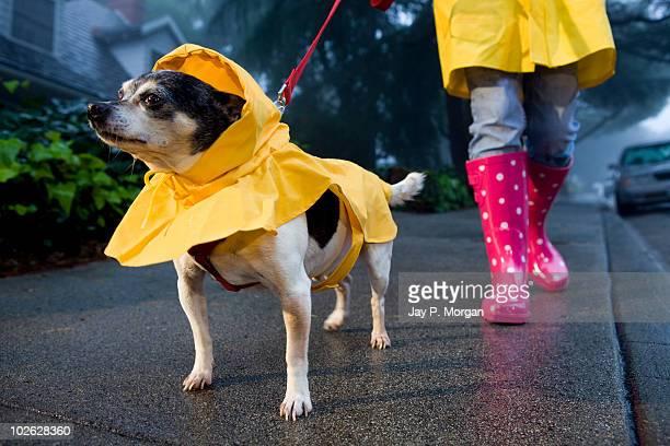 Girl in rain boots walking dog in rain coat