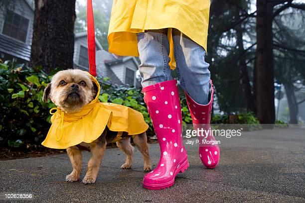 Girl in rain boots walking Yorkie dog in rain coat