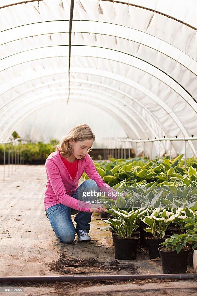 Girl kneeling by plants in polytunnel : Stock-Foto