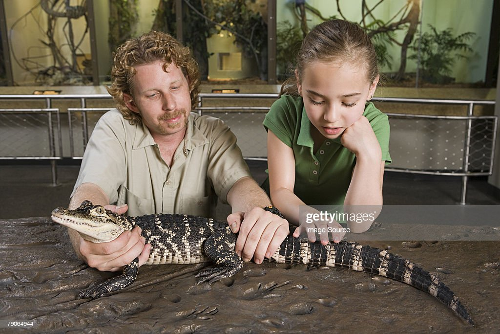 Girl looking at baby alligator