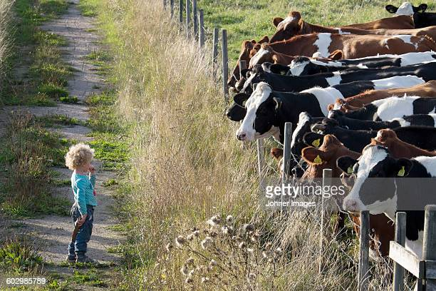 Girl looking at cows on pasture