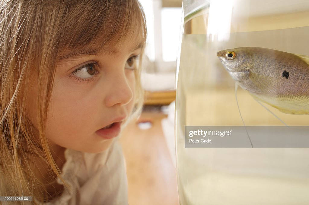 Girl (2-4) looking at fish swimming in tank, close-up : Stock Photo