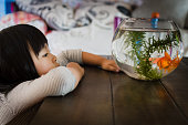 Girl looking at fishbowl