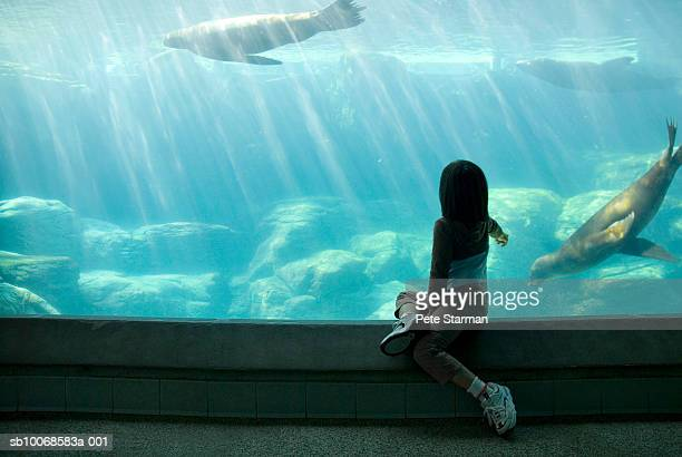 Girl (6-7 years) looking at seals behind glass in pool, rear view