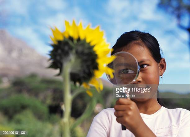 Girl (8-10) looking at sunflower through magnifying glass