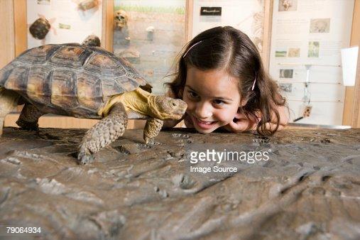 Girl looking at tortoise