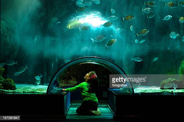 girl looks at the fish in a big aquarium