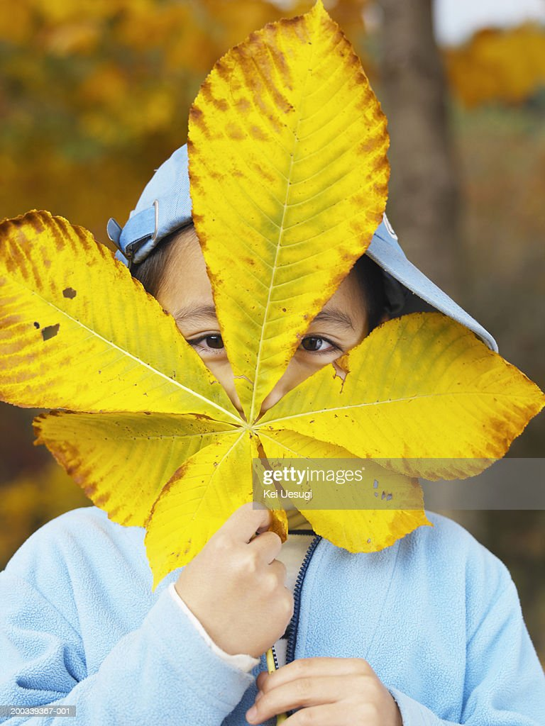Girl (2-4) obscuring face with giant leaf, portrait : Stock Photo