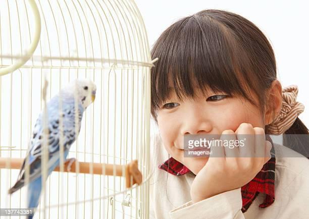 Girl observing budgerigar