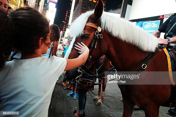 A girl pets a police horse in Times Square on August 19 2015 in New York City As the iconic Times Square continues to draw tourists with its...